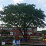 Tree Trimmed By Lambertree